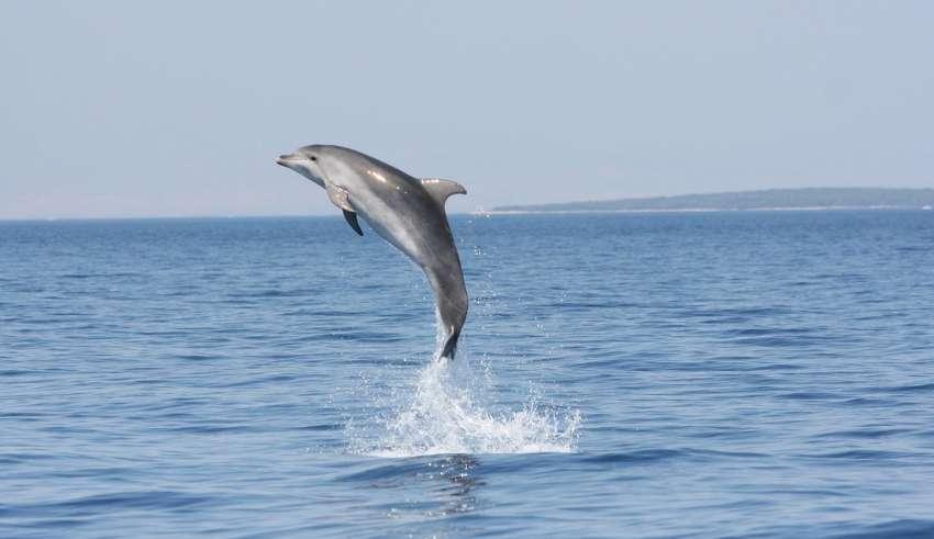 Tag der Delfine